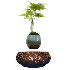Floating Air Bonsai (no plant) Floating Plants, Home Decor Items, Potted Plants, Decoration, Planter Pots, Vase, Gifts, Design, Bonsai Plante