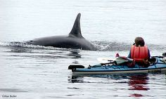 Sea Kayaking in Puget Sound with the resident Orca Whales.