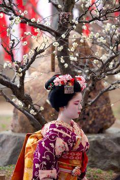 Maiko or geisha. All Japanese, Japanese Beauty, Japanese Kimono, Japanese Culture, Geisha Japan, Japon Tokyo, Bohemian Headband, Memoirs Of A Geisha, Japan Art
