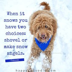 ❤️Hit That Share Button To Motivate Your Friends & Family❤️ ▬▬▬▬▬▬▬▬▬▬▬▬▬▬▬▬▬▬▬ #MondayMotivation #MotivationMonday #quotes #quoteoftheday #motivationalquotes #PuppyLove #PawPrints #Happiness #Goldendoodle #LancasterPuppies www.LancasterPuppies.com Snow Quotes, Winter Quotes, Puppy Quotes, Dog Quotes Funny, Feel Good Quotes, Best Quotes, Life Quotes, Dog Zoomies, Goldendoodle Puppy For Sale