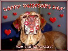 2.14.14 - Valentine Dogs3