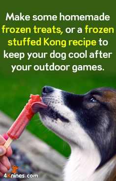 After a fun game outside, why not reward your dog with a cold treat! He'll definitely enjoy it!