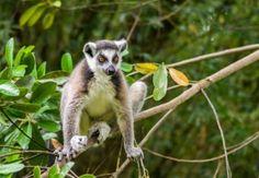 Tipps für Aktivitäten auf Madagaskar-Reise: der Zoo von Ivoloina