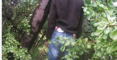 ZRP policeman commits suicide, hangs himself on a tree..Picture - Zim News .NET Zimbabwe - http://zimbabwe-consolidated-news.com/2017/03/21/zrp-policeman-commits-suicide-hangs-himself-on-a-tree-picture-zim-news-net-zimbabwe/