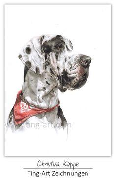 #Matilda #Deutsche #Dogge #DeutscheDogge #german #dog #hund #hunde #zeichnung #zeichnen #auftragszeichnung #comission #tierportrait #hundeportrait #portrait #buntstift #polychromos