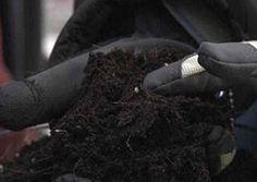 The Last Word: Organic Soil Garden Soil, Edible Garden, Gardening, Soil Conservation, Reap What You Sow, Organic Soil, New Home Construction, Urban Farming, Amazing Gardens