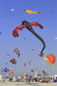 FRANCE - International Kite Festival in Berck-sur-Mer beach with majestic kites in the sky... go in April
