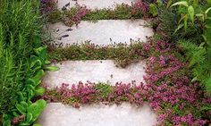 "Garden How to: Plants for Cracks ""What's even more beautiful than a well-built garden path? A badly built one whose cracks are full of fragrant herbs..."""