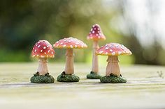 Magical Resin Garden Set of Four Toadstools Mushroom Ornament Decoration Sue Ryder http://www.amazon.co.uk/dp/B00S84DEQ2/ref=cm_sw_r_pi_dp_4xokvb0GAANXP