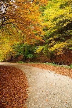 50 beautiful autumn photography   AcrisDesign