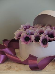 anemone 'Wine White'