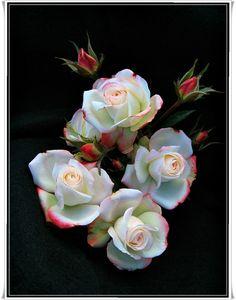 Arcanum {Spray} – Miniature Rose – American Rose Society Photography Contest
