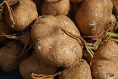 Similarities and Differences between Root Vegetables Jicama and Turnip
