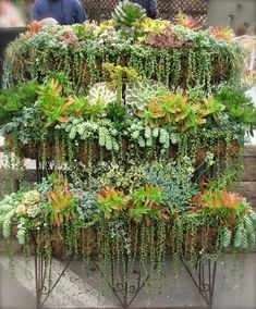 would look great against a wall - Cascade of Succulents by leah