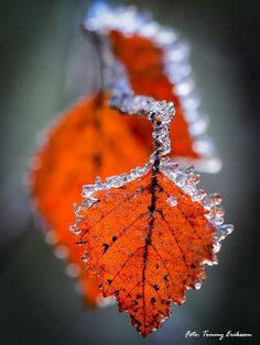 One Frosty Autumn Morning