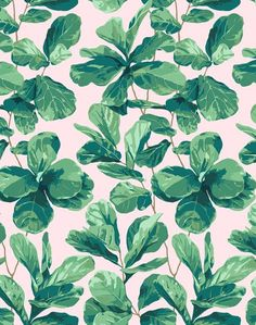 Wallpaper Accent Wall - Fiddle Fig Wallpaper - Peach - Wildas Wallpaper World Wallpaper Paste, Wallpaper Panels, Wallpaper Roll, Tree Wallpaper For Phone, White Wallpaper, Spring Wallpaper, Stunning Wallpapers, Vintage Wallpapers, Fiddle Leaf Fig