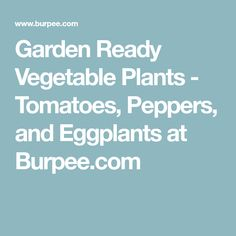 Garden Ready Vegetable Plants   Tomatoes, Peppers, And Eggplants At  Burpee.com