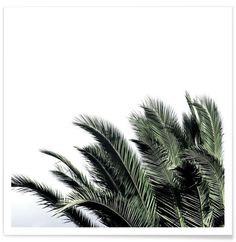 palms of spring ::: pinterest // @mackiewhiteley