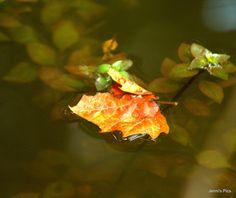IMG_0154 | Flickr - Photo Sharing!
