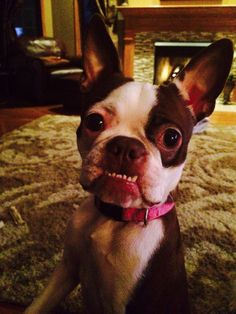 Please Give me a Chip! - Sadie from Valparaiso, USA (Photo)