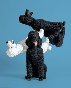 The Freeze, Dolly Doll, First Second, Poodle, Pop Art, Contemporary Art, Mixed Media, Sculptures, Frozen