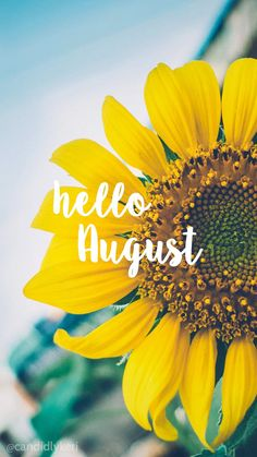 Hello August Sunflower bright happy background August 2016 wallpaper you can… Seasons Months, Days And Months, Months In A Year, Summer Months, Phone Backgrounds, Wallpaper Backgrounds, Iphone Wallpaper, Pretty Backgrounds, Summer Backgrounds