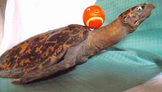 """When the weather gets tough - Mr Angry Orange gets going. """"Lets surf with a turtle"""" he cries!"""