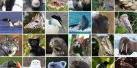 New online library of over 7,500 animal sounds and songs.