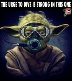 """When someone says they may go diving with you. """"Dive or do not dive, there is no try."""" #Divers #scubadiving"""