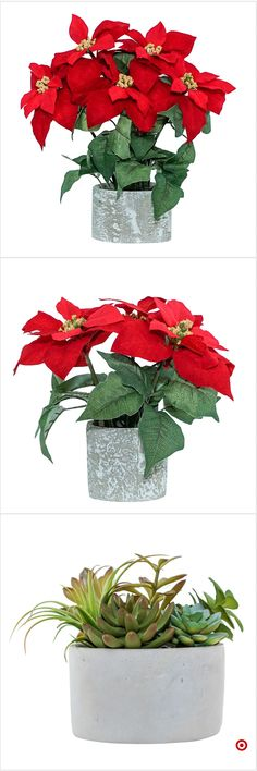 Shop Target for artificial arrangement you will love at great low prices. Free shipping on orders of $35+ or free same-day pick-up in store. Hosta Flower, Flower Plants, Flower Art, Single Flowers, Fake Flowers, Beautiful Flowers, Christmas Flowers, Christmas Art, Xmas