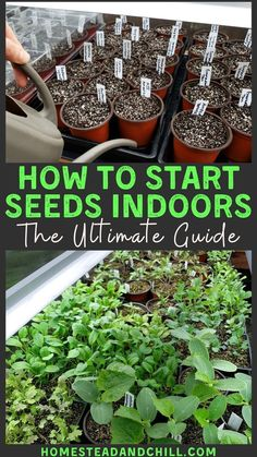 Come learn everything you need to know to start garden seeds indoors for strong and healthy seedlings, including supplies needed, tips for timing, and step-by-step instructions to sow seeds - and how take care if young seedlings! #seedstarting #gardentips #gardening #growyourown