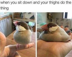 When you sit down and your thighs do the thing...