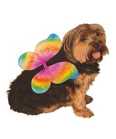 Rainbow Fairy Wings Dog Costume #zulily #zulilyfinds