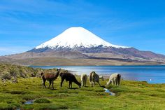 Lake Chungara Chilean Andes - Photography by Kurt Van Wagner