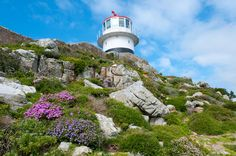 UNESCO World Heritage SIte #125: Cape Floral Region Protected Areas in South Africa