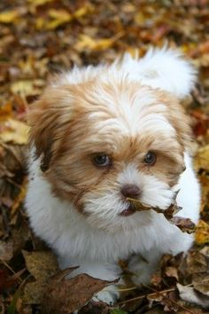 cute puppy dog leaves