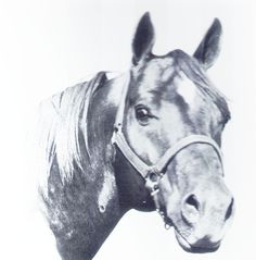 A new strain of top cow horses came along with the introduction of Peppy San. He was inducted into the Hall of Fame in 1999. Learn more about the AQHA Hall of Fame inductees at http://aqha.com/Foundation/Museum/Hall-of-Fame/Hall-of-Fame-Inductees.aspx .