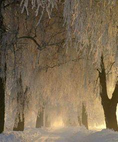 Beautiful snowfall and sunlight on a winter day Winter Szenen, Winter Magic, Winter Trees, Snowy Trees, Snowy Forest, Magical Forest, Winter Night, Winter White, Beautiful Forest