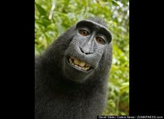 This silly monkey got a hold of a photographer's camera and he took his own portrait!  Too cute!!!