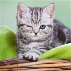 cute cats and kittens | Winking Kitten | CuteStuff.co - Cute Animals, Cute Pictures, Cute ...