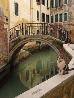 """Where's the gondolier?"" -- cats of Venice   Panoramio - Photo of Venice Cat"