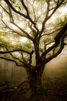 Tree, Tai Mo Shan, Hong Kong by Carlo Yuen on 500px
