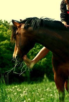 love, leisurely ride... barefoot... probably bareback...