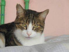 Helfende Hände e.V. - Katze Cookie (EKH 8-9 Jahre) sucht ein Zuhause…