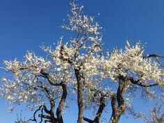#primavera nel #gargano