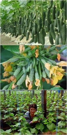 Outstanding Home vegetable garden info are available on our web pages. Check it out and you wont be sorry you did. Vegetable Garden Planner, Backyard Vegetable Gardens, Vegetable Garden Design, Indoor Garden, Garden Landscaping, Garden Plants, Planting Vegetables, Growing Vegetables, Palette Garden