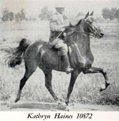 American Saddlebred mare Kathryn Haines became a Hall of Fame Broodmare