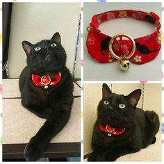 くろの首輪が届きました(゚∀゚)~🎵 こちらも@momo.remon.yuzu  さんの#ハンドメイド首輪 です  大変な思いをしている🐶😺ちゃんのために頑張っている素敵なmamaさんです😍  黒猫とお花の布でとても可愛く作っていただきました❤ありがとうございました(人´∀`)♪ #黒猫#クロネコ#くろねこ#くろねこら部#猫#にゃんこ#ねこ #ねこら部#ねこ部#ネコ#にゃんだふるらいふ#にゃんすたぐらむ#ニャンスタグラム#愛猫 #猫好き#handmade布小物