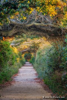 A tunnel of live oak trees photographed at Pea Island on the Outer Banks, NC.