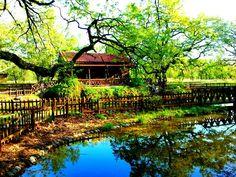 KOURI FOREST, ALMYRO MAGNISIAS Planet Earth, Garden Bridge, Planets, Greece, Deck, Outdoor Structures, Cabin, House Styles, Outdoor Decor